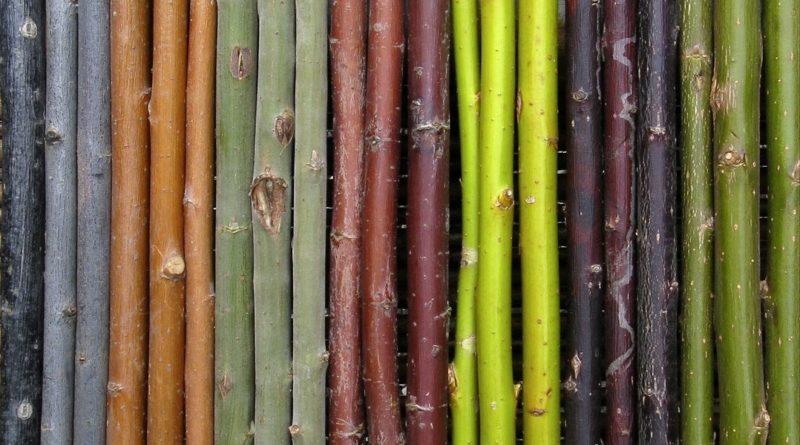 salice-mario-brocchi-colonna-2
