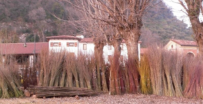 mario-brocchi-colonna-salice-1